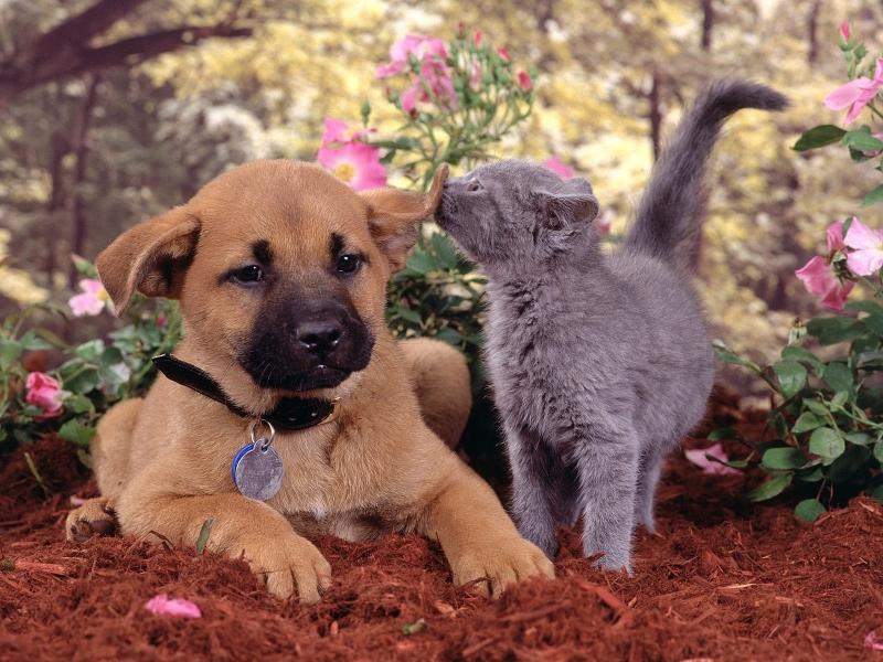 щенок с котенком