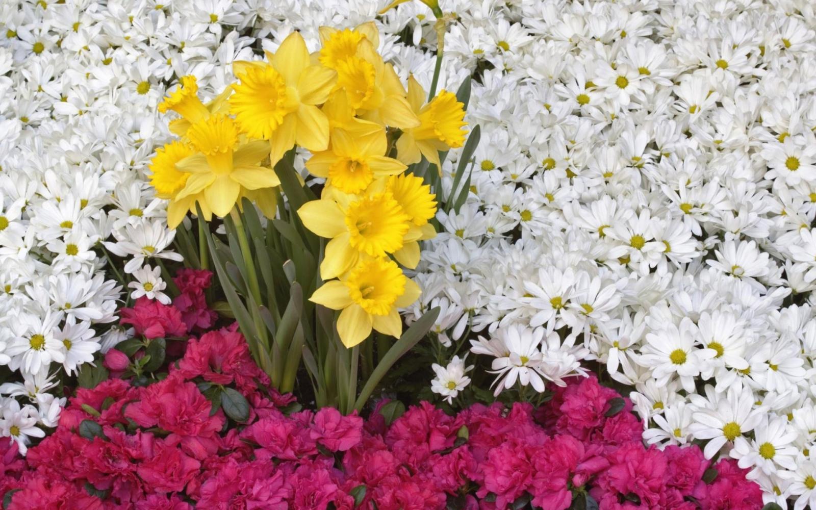 Цветы для любимой фото 22 фотография