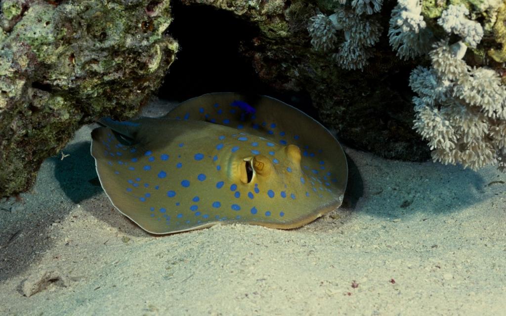 Рыбы красного моря названия фото 7