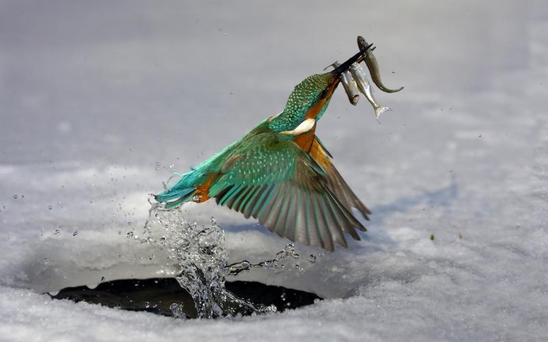 птиц живущих в украине