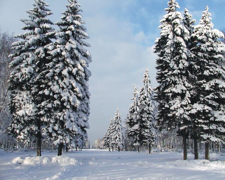 Зимний пейзаж обои для рабочего