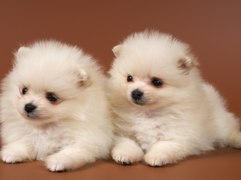 Маленькие собаки породы
