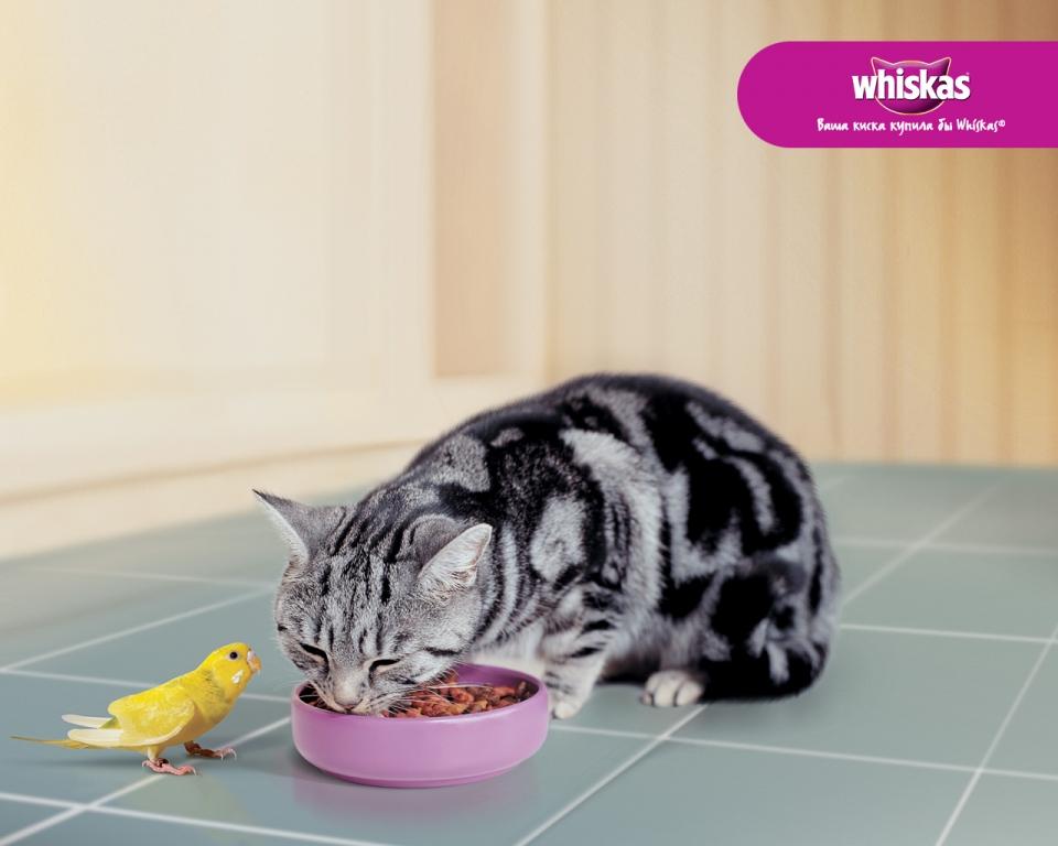 Фото животные едят 4