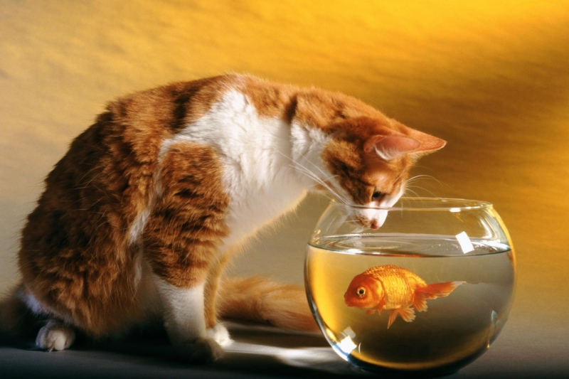 Скачать Игру Котик Ловит Рыбу Скачать