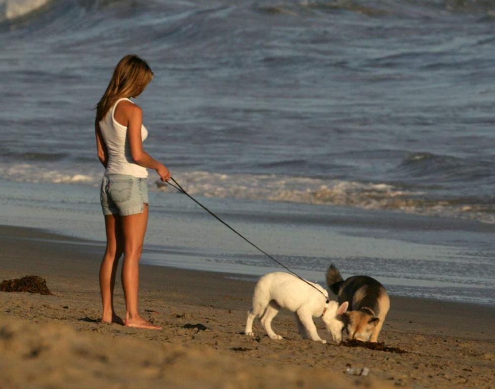 Картинки прогулка с собакой 3