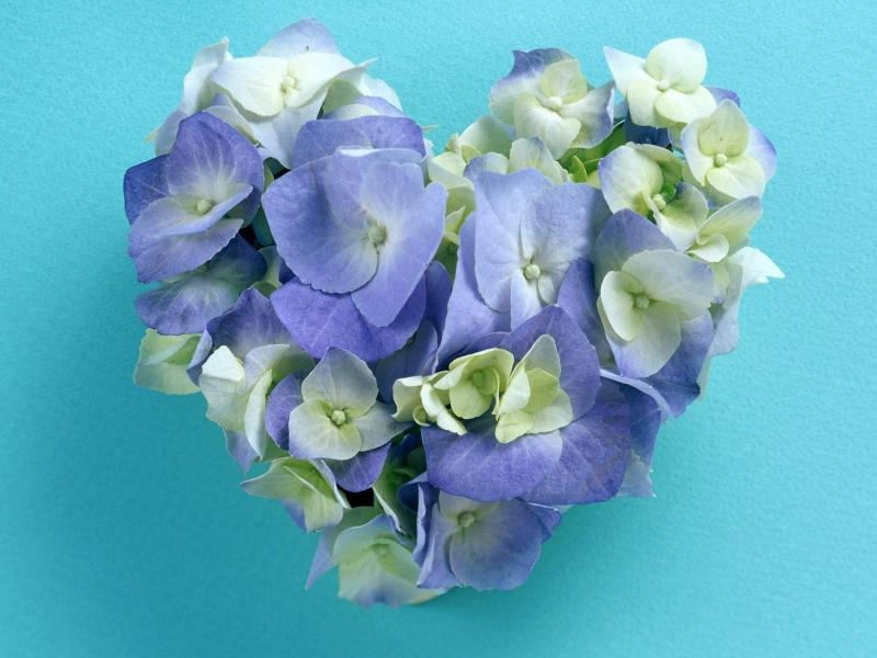 Красивые цветы для любимой