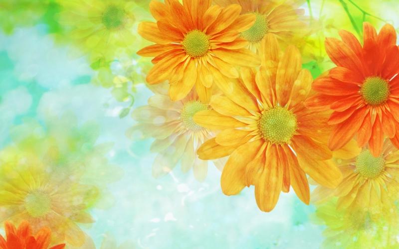 Яркие цветы в графике