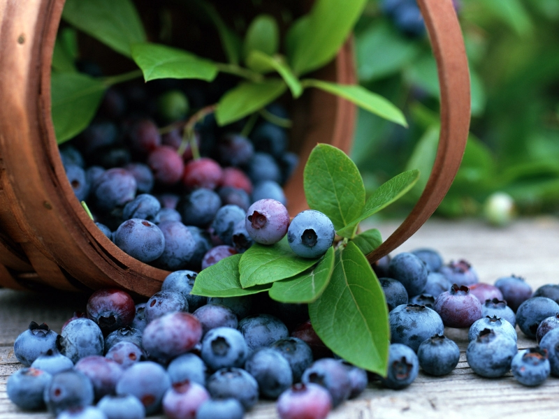http://o6oi.ru/main.php/61976-2/basket_with_berries.jpg