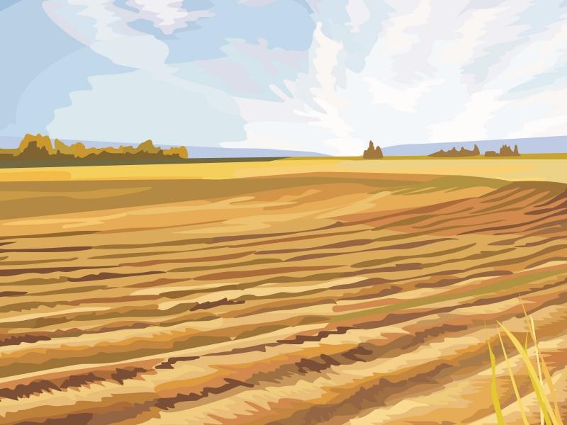 картинки поля: